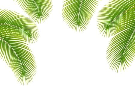 Illustration pour Leaves of palm tree on white background - image libre de droit