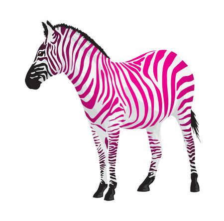 Illustration for Zebra with strips of pink color illustration. - Royalty Free Image
