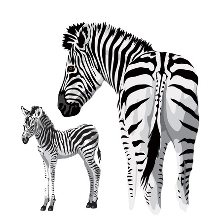 Illustration pour Zebra with a foal. Vector illustration. - image libre de droit