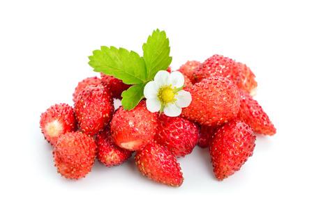 Foto de Wild strawberry with flower. Isolated on white background. - Imagen libre de derechos