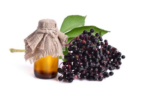 Photo for Sambucus nigra. Common names include elder, elderberry, black elder, European elder, European elderberry and European black elderberry. - Royalty Free Image