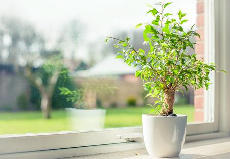 Photo pour Small tree in a window - image libre de droit
