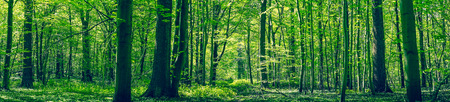 Photo for Green forest panorama scenery in the spring - Royalty Free Image