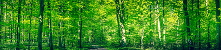 Photo for Green forest panorama with a trail in the spring - Royalty Free Image