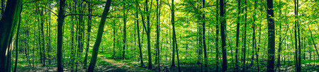Photo for Trail in a green forest panorama landscape in the spring - Royalty Free Image