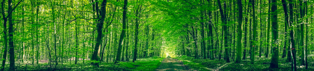 Photo for Panorama scenery with a road in a green forest - Royalty Free Image