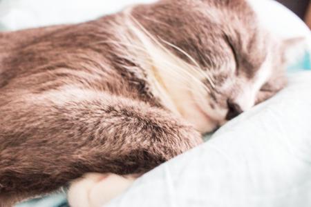 Foto de Blurred Grey cat sleeping bed cute fluffy paw. - Imagen libre de derechos