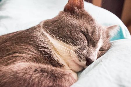 Foto de Grey cat sleeping bed cute fluffy paw selective focus.. - Imagen libre de derechos