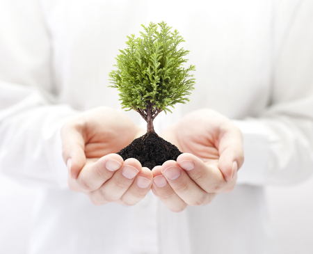 Photo pour Growing green tree in hands - image libre de droit