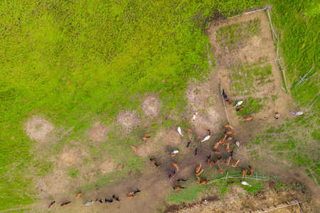 Photo pour The herd of horses returned from the pasture - image libre de droit