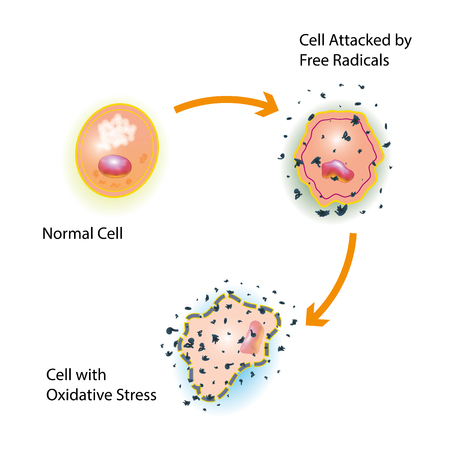 Illustrazione per Oxidative stress of a healthy cell caused by an attack of free radicals - Immagini Royalty Free