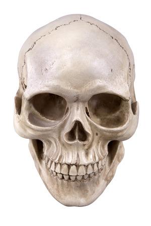 Photo pour Human skull (cranium) isolated on white  - image libre de droit