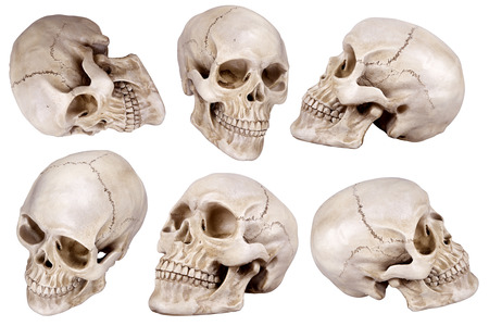 Photo pour Human skull (cranium) set isolated on white background - image libre de droit