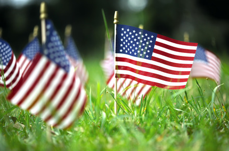 Photo pour Group of American flags in green grass - image libre de droit