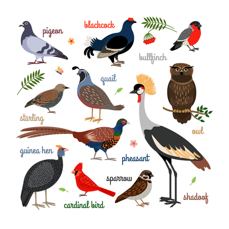 Illustration pour Vector bird icons. Colorful realistic birds. Owl and pheasant, bullfinch and crane - image libre de droit