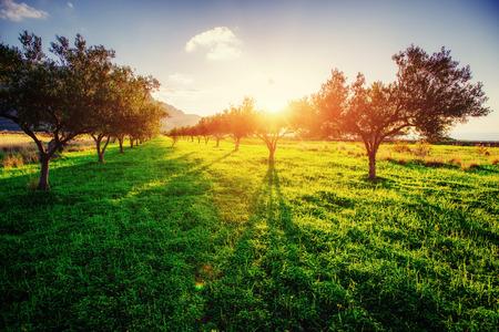 Photo pour Tree shadow with sunset - image libre de droit