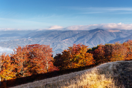 Photo for Autumn in mountain, amazing landscape - Royalty Free Image
