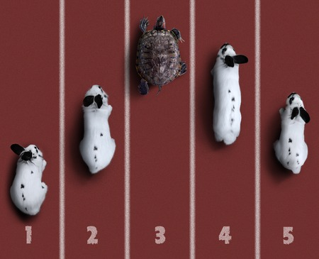 competition. championship. Turtle faster a rabbit.