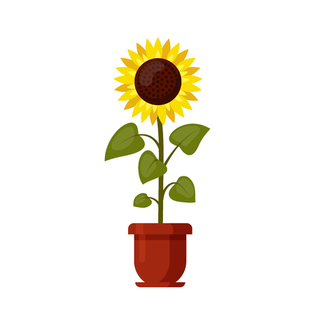 Illustration pour Sunflower cartoon grown in a flowerpot isolated on a white. - image libre de droit