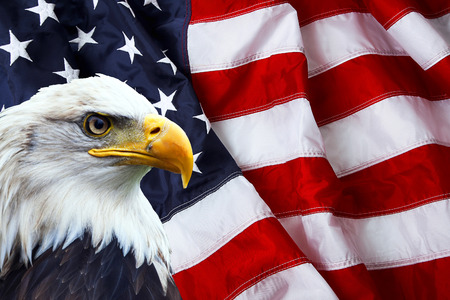 Photo pour North American Bald Eagle on American flag - image libre de droit