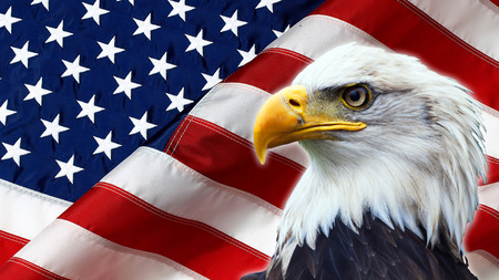 Foto de North American Bald Eagle on American flag - Imagen libre de derechos