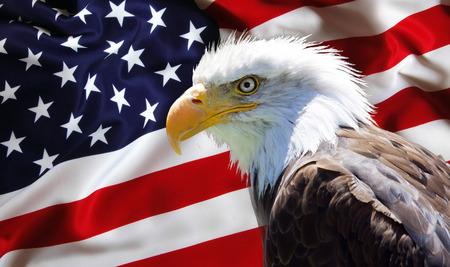 Foto de Background, wallpaper - North American Bald Eagle on american flag - Imagen libre de derechos