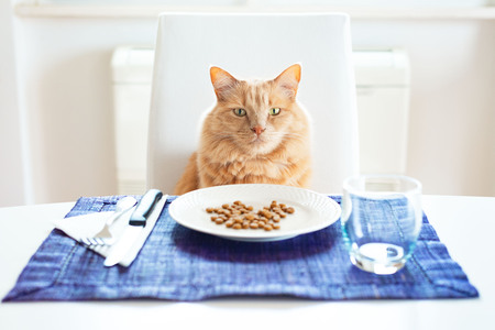 Photo for Cat sitting in front on a table set like a human with his favourite dry food on the plate - Royalty Free Image