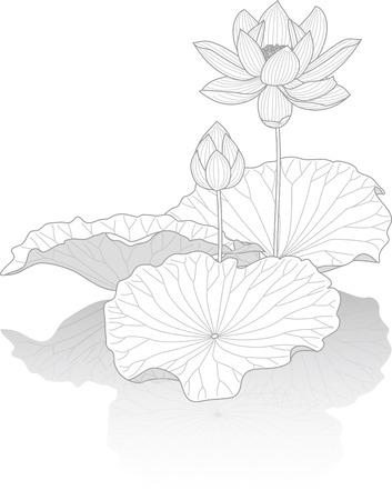 Ilustración de Lotus flower - Imagen libre de derechos