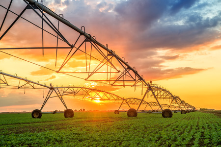 Photo for Automated farming irrigation sprinklers system on cultivated agricultural landscape field in sunset - Royalty Free Image