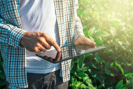 Foto de Farmer using digital tablet computer in cultivated soybean crops field, modern technology application in agricultural growing activity, selective focus - Imagen libre de derechos
