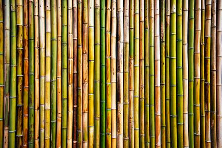 Photo for Bamboo wall texture, real natural pattern as background - Royalty Free Image