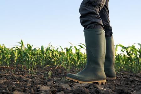 Foto de Farmer in rubber boots standing in the field of cultivated corn maize crops - Imagen libre de derechos