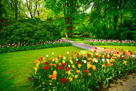 Foto de Garden in Keukenhof, tulip flowers and trees on background in spring  Netherlands, Europe  - Imagen libre de derechos