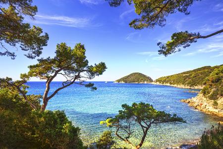 Photo pour Elba island sea, Portoferraio Viticcio beach coast and mediterranean pine trees Tuscany, Italy, Europe. - image libre de droit