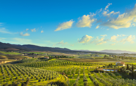 Photo for Maremma countryside panoramic view, olive trees, rolling hills and green fields on sunset. Sea on the horizon. Casale Marittimo, Pisa, Tuscany Italy Europe. - Royalty Free Image
