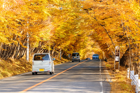 Photo pour Scene of cars drive along the road with autumn red leaf in Aomori, Japan. Beautiful country side along the road great time for travel. - image libre de droit