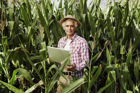 Photo for Smiling farmer using a laptop in the fields, corn plants on background, technology and agriculture concept - Royalty Free Image