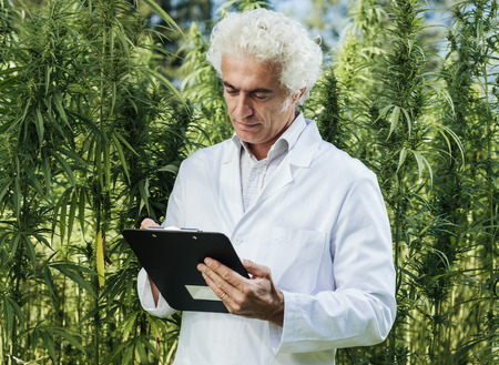 Foto de Scientist checking hemp plants in the field, he is writing down notes on a clipboard, herbal alternative medicine concept - Imagen libre de derechos