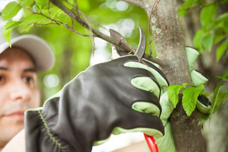 Photo pour Close-up of a professional gardener pruning a tree - image libre de droit