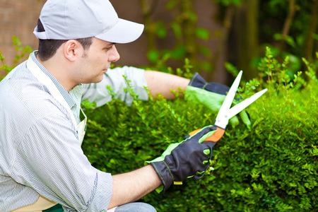 Foto de Professional gardener pruning an hedge - Imagen libre de derechos