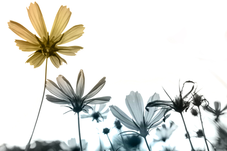 Photo for Retro flowers,Vintage Flowers background - Royalty Free Image
