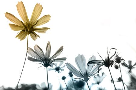 Photo pour Retro flowers,Vintage Flowers background - image libre de droit