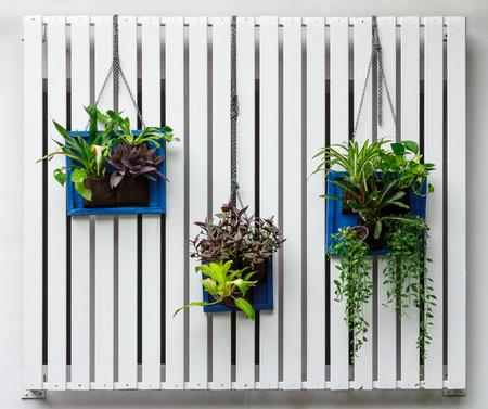 Foto de Vertical garden - Imagen libre de derechos