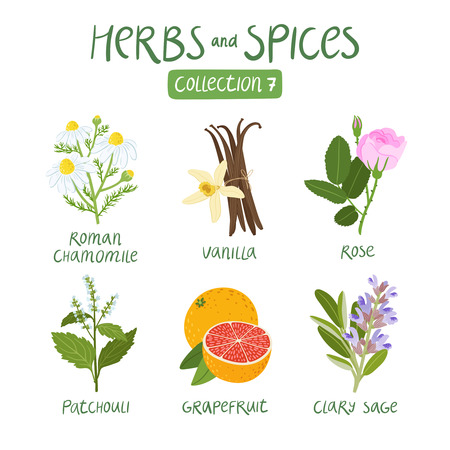 Illustration pour Herbs and spices collection 7. For essential oils, ayurvedic medicine - image libre de droit