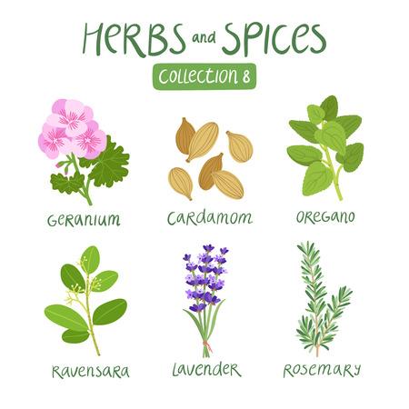 Ilustración de Herbs and spices collection 8. For essential oils, ayurvedic medicine - Imagen libre de derechos