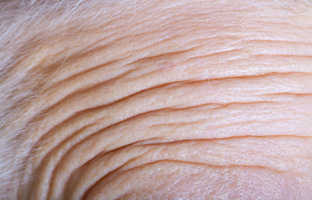 Forehead of an elderly woman with deep wrinkles. Close up detail.
