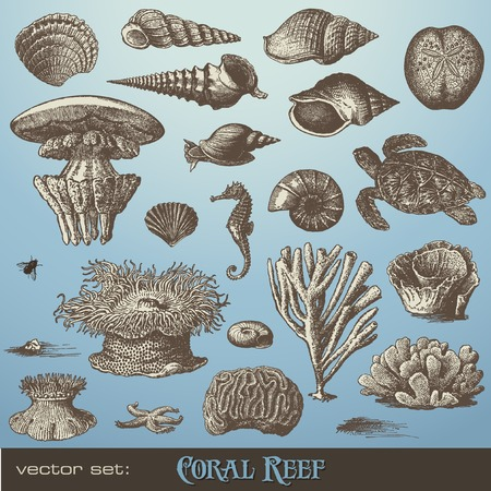 set: coral reef - including different corals, shells and animals