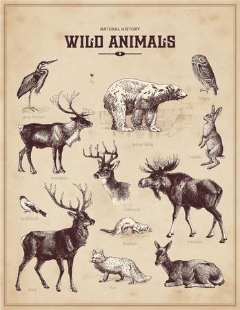 Illustration for wild animals - Royalty Free Image