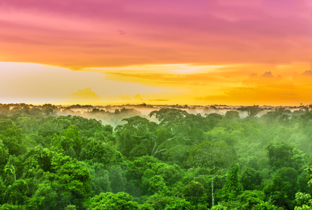 Photo for View on Purple sunset over rainforest trees in Brazil - Royalty Free Image