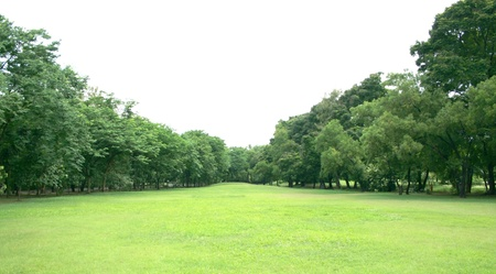 Photo for Green Lawn and Trees in a Park - Royalty Free Image